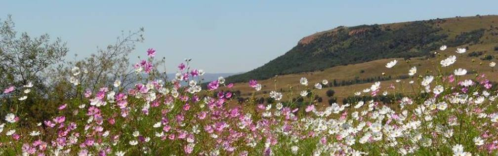 Walkerville South Africa